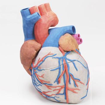 3d yazici baski prototip medikal kalp