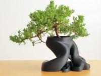 3D bonsai saksı zaxe